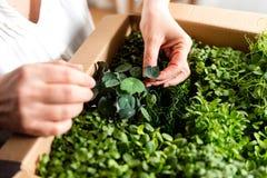 Vrouw die kruiden en greens bekijken Stock Afbeeldingen