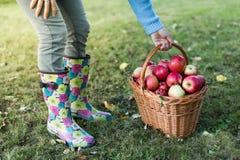 Vrouw die mandhoogtepunt van appelen opnemen Stock Afbeeldingen