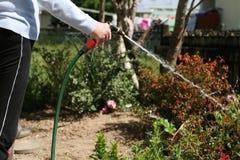 Vrouw die met artritis de tuin water geeft Royalty-vrije Stock Foto's