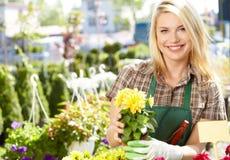 Vrouw die met bloemen bij een serre werken. Royalty-vrije Stock Afbeeldingen