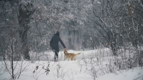 Vrouw die met een hond lopen stock video