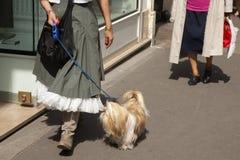 Vrouw die met leuke hond in park lopen stock afbeeldingen