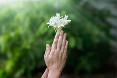 Vrouw die met witte bloem in handen op aard bidden stock fotografie