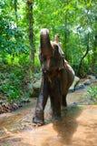 Vrouw die op een olifant berijdt Stock Afbeeldingen