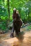Vrouw die op een olifant berijdt Stock Foto