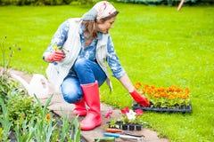 Vrouw die op middelbare leeftijd bloemen planten royalty-vrije stock afbeelding