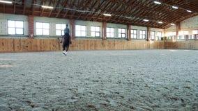 Vrouw die op paard langzaam op arena lopen stock footage