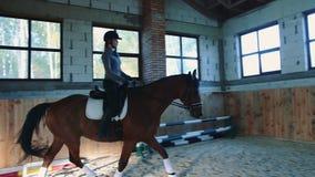 Vrouw die op paard langzaam op arena lopen stock video