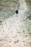 Vrouw die op Rocky Hiking Path lopen Royalty-vrije Stock Afbeelding