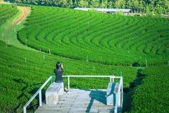 Vrouw die op terras plaatsen en aanplanting van de foto de groene thee met haar smartphone nemen in Chiang Rai Province stock afbeeldingen