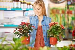 Vrouw die poinsettia en begonia vergelijken Stock Foto