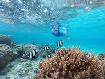Vrouw die in Rarotonga Cook Islands snorkelen Royalty-vrije Stock Foto's