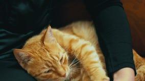 Vrouw die Rode Cat Lying op de Laag strijken stock footage