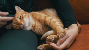 Vrouw die Rode Cat Lying op de Laag strijken stock video