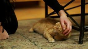 Vrouw die Rode Cat Lying op het Tapijt strijken stock video