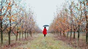 Vrouw die in rode laag, hoed en paraplu alleen tussen bomen in appeltuin bij de herfstseizoen lopen Het meisje gaat weg door stock video