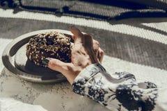 Vrouw ` die s een chocoladedoughnut met de hand plukken Stock Afbeelding