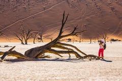 Vrouw die schilderachtige droge boom fotograferen Stock Afbeeldingen