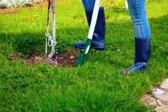 Vrouw die schop in haar tuin met behulp van Royalty-vrije Stock Afbeeldingen