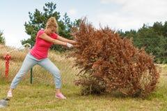 Vrouw die trekkend dode boom verwijderen stock foto's