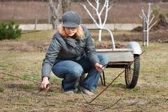 Vrouw die in tuin werkt Stock Foto