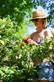 Vrouw die in tuin werkt Stock Afbeeldingen