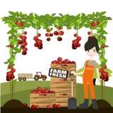 Vrouw die verse tomaten plukt Royalty-vrije Stock Foto