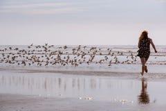 Vrouw die Vogels op Strand achtervolgen stock afbeeldingen