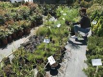Vrouw die voor nieuwe installaties en bloemen bij het tuinieren en installaties openluchtverkoper winkelen stock afbeeldingen