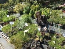 Vrouw die voor nieuwe installaties en bloemen bij het tuinieren en installaties openluchtverkoper winkelen stock foto