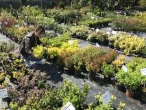 Vrouw die voor nieuwe installaties en bloemen bij het tuinieren en installaties openluchtverkoper winkelen royalty-vrije stock afbeeldingen