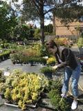 Vrouw die voor nieuwe installaties en bloemen bij het tuinieren en installaties openluchtverkoper winkelen royalty-vrije stock foto