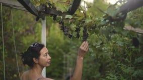 Vrouw die in wijngaard, het plukken rode druif lopen en het weggaan, langzame mo stock videobeelden