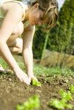 Vrouw die zaailingen plant Stock Afbeeldingen
