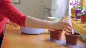 Vrouw die zaden in een pot planten stock footage
