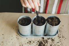 Vrouw die zaden in metaalpotten planten Stock Fotografie