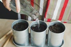 Vrouw die zaden in metaalpotten planten Royalty-vrije Stock Foto