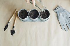 Vrouw die zaden in metaalpotten planten Stock Afbeelding