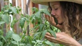 Vrouw in een strohoed die het gewas in een serreclose-up snuiven stock videobeelden