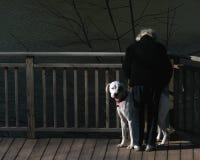 Vrouw en Hond royalty-vrije stock fotografie