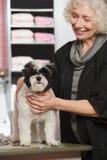 Vrouw en hond bij huisdier het verzorgen salon stock foto's