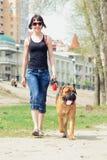 Vrouw en hond bullmastiff stock fotografie