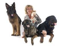 Vrouw en honden Royalty-vrije Stock Afbeeldingen