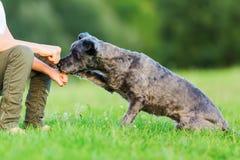 Vrouw en jonge jongen die een traktatie in de vuist houden aan een kleine hond Royalty-vrije Stock Afbeeldingen