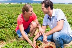Vrouw en man op een gebied van de oogst zelf aardbei royalty-vrije stock foto
