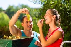 Vrouw en man die met druif het oogsten machine werken Stock Foto