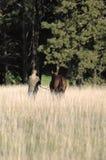 Vrouw en Paard op Gebied Royalty-vrije Stock Afbeelding