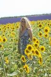 Vrouw in gebiedszonnebloemen Royalty-vrije Stock Foto
