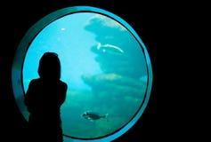Vrouw in het aquarium Stock Foto