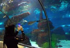 Vrouw in het Aquarium van Barcelona royalty-vrije stock afbeelding